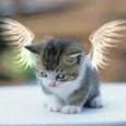 Отдается в дар рукодельный 'кот в мешке'