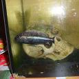 Отдается в дар Рыбка + аквариум