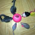 Отдается в дар Мышки для кошки