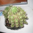 Отдается в дар Многодетная семейка кактусов