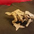 Отдается в дар Скелет динозавра =)