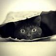 Отдается в дар Кот в мешке Омский