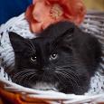 Отдается в дар Котята на любой вкус