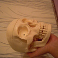 Отдается в дар часть скелета