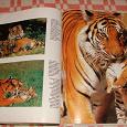 Отдается в дар Книга «Большие кошки» большого размера с иллюстрациями.