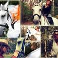 Отдается в дар Фотосессия с лошадьми 27 сентября
