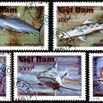 Отдается в дар Морские обитатели вьетнамских вод