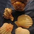 Отдается в дар ракушки дары моря