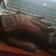 Отдается в дар перчатки ретро