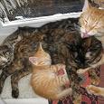 Отдается в дар Рыжий домашний котенок ищет семью!
