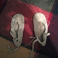 Отдается в дар балетки «белые»