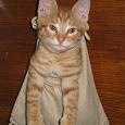 Отдается в дар Котик в мешке (косметический)