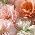 Отдается в дар Отдушка «Чайная роза»