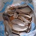 Отдается в дар Чуланные раскопки (4): морские ракушки для аквариума.