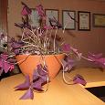 Отдается в дар Отросток красивого цветочка — Кислица