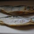 Отдается в дар Рыба сушеная