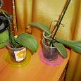 Отдается в дар Орхидеи