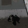 Отдается в дар котятки