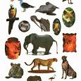 Отдается в дар Наклейки «Животный мир»