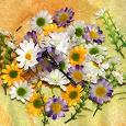 Отдается в дар Цветы для декора