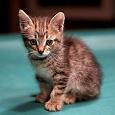 Отдается в дар Игривый котенок ищет семью