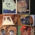 Отдается в дар Карманные календарики «Кошки 2»
