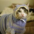 Отдается в дар Одёжный котик №2