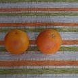 Отдается в дар 2 грейпфрута