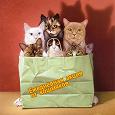 Отдается в дар Вещевой кот на осень