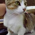 Отдается в дар Очень домашняя кошка