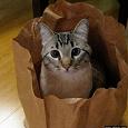 Отдается в дар Кот в мешке — косметика и дамские штучки