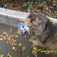 Отдается в дар Корм для взрослых котов и кошек