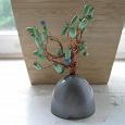 Отдается в дар Денежное дерево