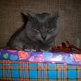 Отдается в дар мой рукодельный котик