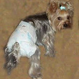 Отдается в дар Памперсы для маленьких собак