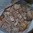 Отдается в дар ракушки 1.5-2 кг