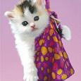 Отдается в дар Котик «Дамские приятности»