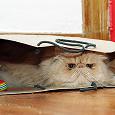 Отдается в дар кот в мешке домашний каждодневный