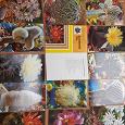 Отдается в дар Набор открыток Кактусы