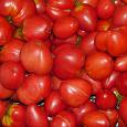 Отдается в дар Семена помидора на густую пасту «Вельможа»