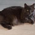 Отдается в дар пушистый, ласковый кот в добрый руки