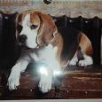 Отдается в дар Картинки собаки