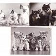Отдается в дар Фотооткрытки с котятами