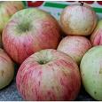 Отдается в дар Пару кг яблок