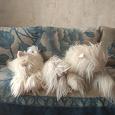 Отдается в дар Собачья семья)