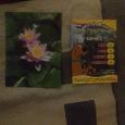 Отдается в дар Коллекционное — каленларик и карточка Скуби- ду.