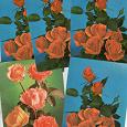 Отдается в дар Чистые открытки с розами