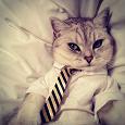 Отдается в дар Одежно-офисный котик