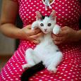 Отдается в дар Котик одежечный 42-44, 16 в 1:))