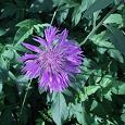 Отдается в дар цветочки для сада, огорода.